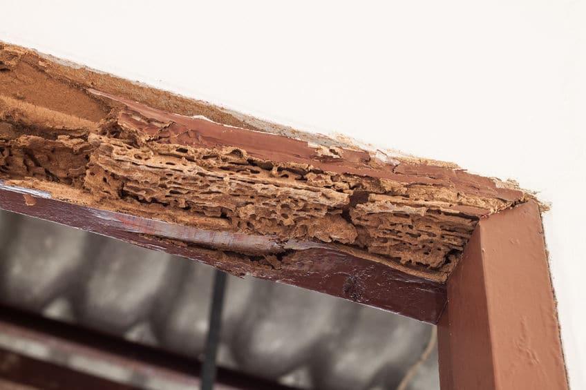 Pest Control Near Me - Pest Control, Lawn Care, Termite