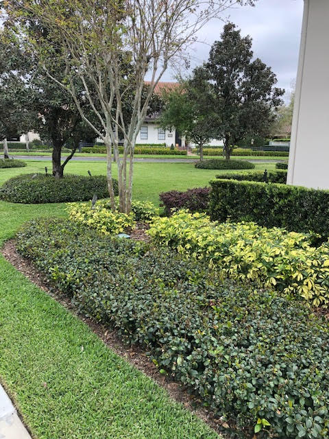 Lawn And Garden Near Me >> Lawn Care Near Me In Orlando Protex Lawn And Pest Control