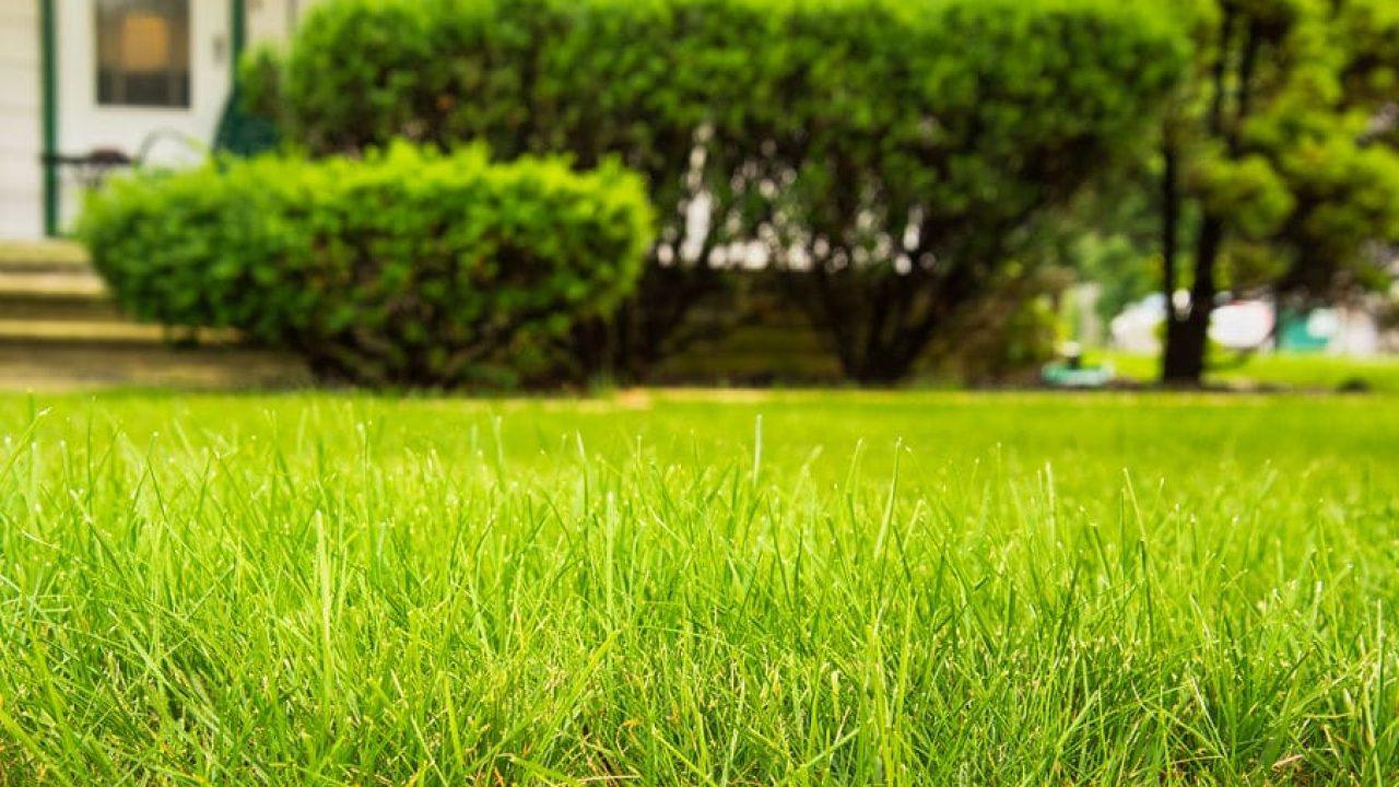 Lawn Care Services Orlando Florida Protex Lawn Care Pest Control